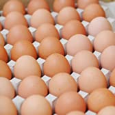 【箱売り】 輝黄卵 (玉子・たまご・卵・タマゴ) 1箱 福岡産・九州産(10kg、Mサイズ、約150~160玉)九州 たまご 【業務用・大量販売】
