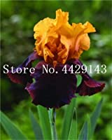 種子パッケージ:100個BonsaiPerennia成長するとガーデン簡単のためにレアひげを生やした、自然の種子オーキッドDIY:12