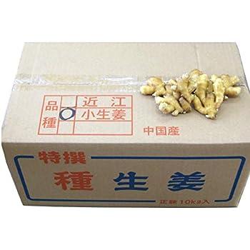 種生姜 小生姜10kg 中国産種生姜