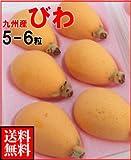 南国フルーツ 九州産びわ1パック(5〜6粒)送料無料¥2,500