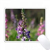 アメリカ、カリフォルニア州、サンディエゴ。ラットスネークキャニオンのルパン野生の花。 PC Mouse Pad パソコン マウスパッド