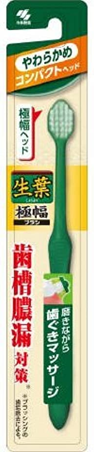 生葉極幅ブラシ コンパクト やわらかめ × 10個セット