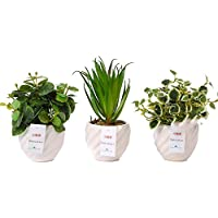 fleurmelody フルールメロディ 光触媒 人工観葉植物 造花 3個セット (白(多肉/ユーカリB/C))