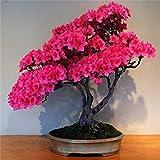 ミックス:盆栽で庭のための新しいARRL 10種のツツジの種子種子