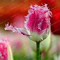 15真のチューリップの球根盆栽花植物花の球根象徴愛Tulipanesの花の植物のために庭の植物(チューリップ盆栽):14