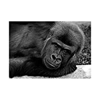 Gorilla Ape Black White Portrait Art Picture Wall Art Print ポートレート画像壁