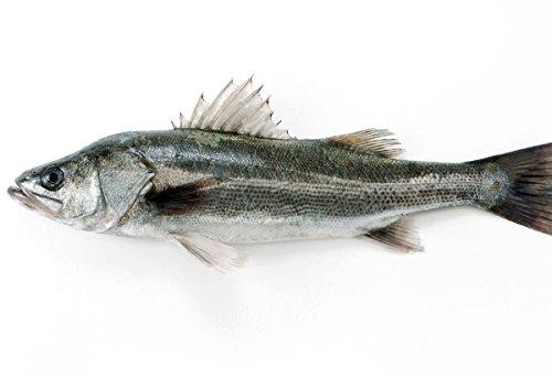 築地魚群 天然 スズキ1尾 国産 1-1.5kg前後サイズ