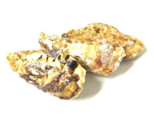 黒帯 牡蠣 殻付き 生食 北海道産 天然 かき貝 お刺身 生食可 冷蔵 (中小サイズ 5個)