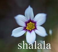 ミニニワゼキショウ属ポットChlorophytum Scindapsus盆栽ホームPurfyエアプラントG色の花、100個/袋:2