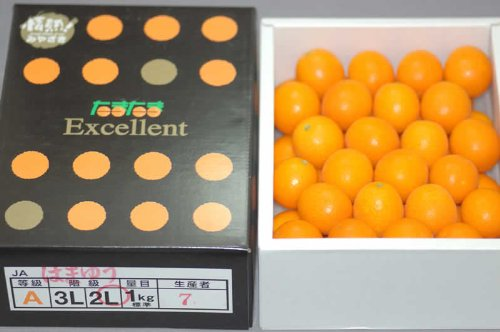 完熟きんかん 宮崎県産『たまたまエクセレント』約1kg (旧商品名 たまたま)