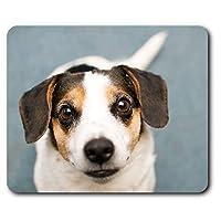 快適なマウスマット - ジャック・ラッセル・テリアの子犬犬ペットコンピュータ&ノートパソコン、オフィス、ギフト、ノンスリップベースのため23.5 X 19.6センチメートル(9.3 X 7.7インチ) - RM16290