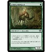 マジック:ザ・ギャザリング 【ツカタンのサリッド】【コモン】 PLC12-079-C ≪プレインチェイス2012≫