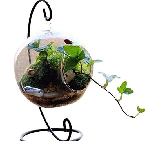 SACHI ハンギング テラリウム スタンド 付き アクアリウム 観葉植物 インテリア (12cm, 丸 タイプ)