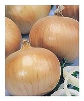種子パッケージ:: C - オニオン - SEED
