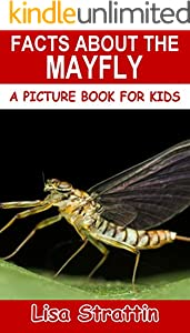 Facts About the Mayfly (A Picture Book for Kids 384) (English Edition)