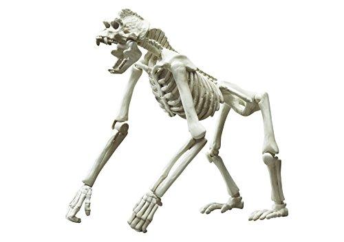 ポーズスケルトン哺乳類 ゴリラ