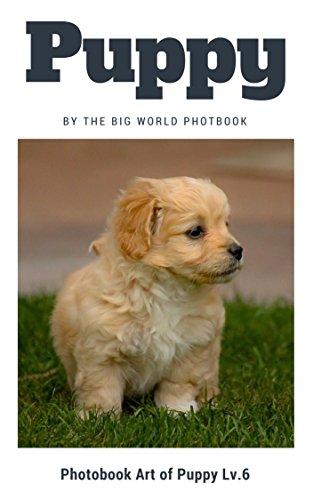 Puppy by The Big World Photobook : Photo book dog, Dog photography,The Dog,My Dog,Cats,Dog,Cat Dog,Black Cat,White Kitten,Cat Memes,Black Kitten,Kittens,Kitten ... (Photobook Art of Puppy 6) (English Edition)