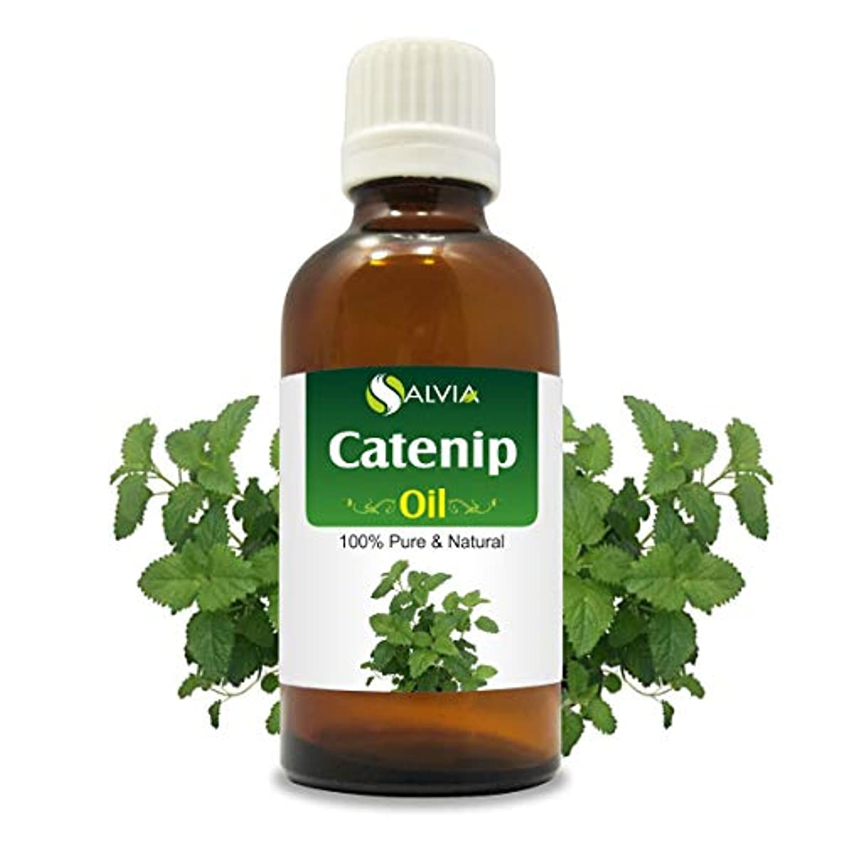 メンテナンスぐるぐる入学するCatnip Oil (Nepeta cataria) 100% Natural Pure Undiluted Uncut Essential Oil 15ml