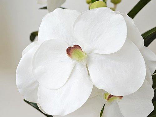 蘭(バンダ)の造花(アートフラワー) ホワイト 光触媒加工
