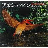 アカショウビン―火の鳥に出会った (日本の野鳥)