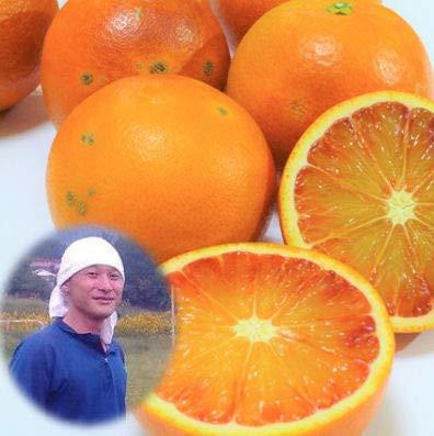 無農薬 訳あり ブラッドオレンジ 5kg 有機栽培 能勢さんのブラッドオレンジ 国産