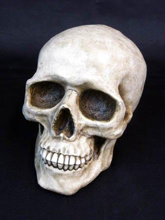 TBS 金曜ドラマ「ヤマトナデシコ七変化」のスナコの部屋に出ました。skull daddy スカル バンク (貯金箱) Lサイズ
