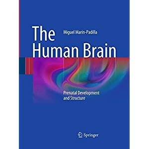The Human Brain: Prenatal Development and Structure