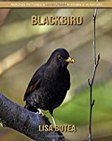 Blackbird: Amazing Pictures & Fun Facts on Animals in Nature