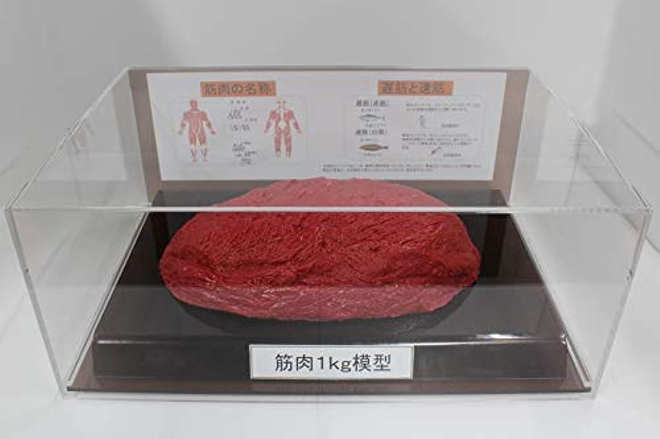 コーヒースラダム機密筋肉模型 フィギアケース入 1kg ダイエット 健康 肥満 トレーニング フードモデル 食品サンプル
