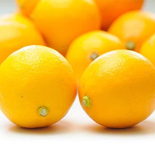 佐賀県産 レモン 2kg 特別栽培農産物 国産 檸檬 れもん