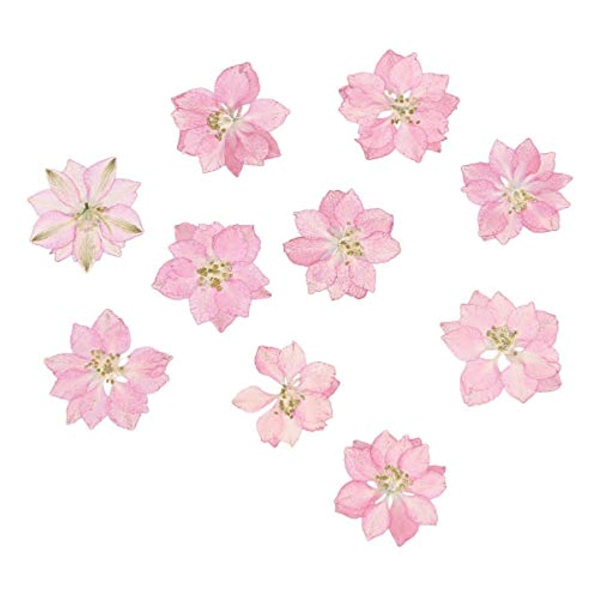 ペースト金属回転させるHEALLILY リアルドライ押花天然花飾り用diyジュエリーペンダント電話ケースカード20ピース