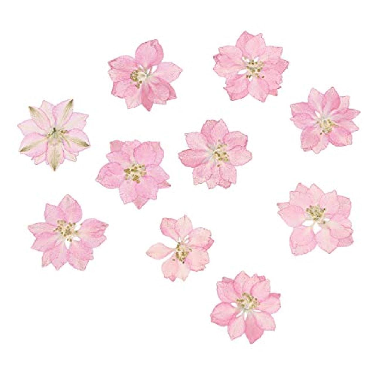 永久にバッチ悩むHEALLILY リアルドライ押花天然花飾り用diyジュエリーペンダント電話ケースカード20ピース