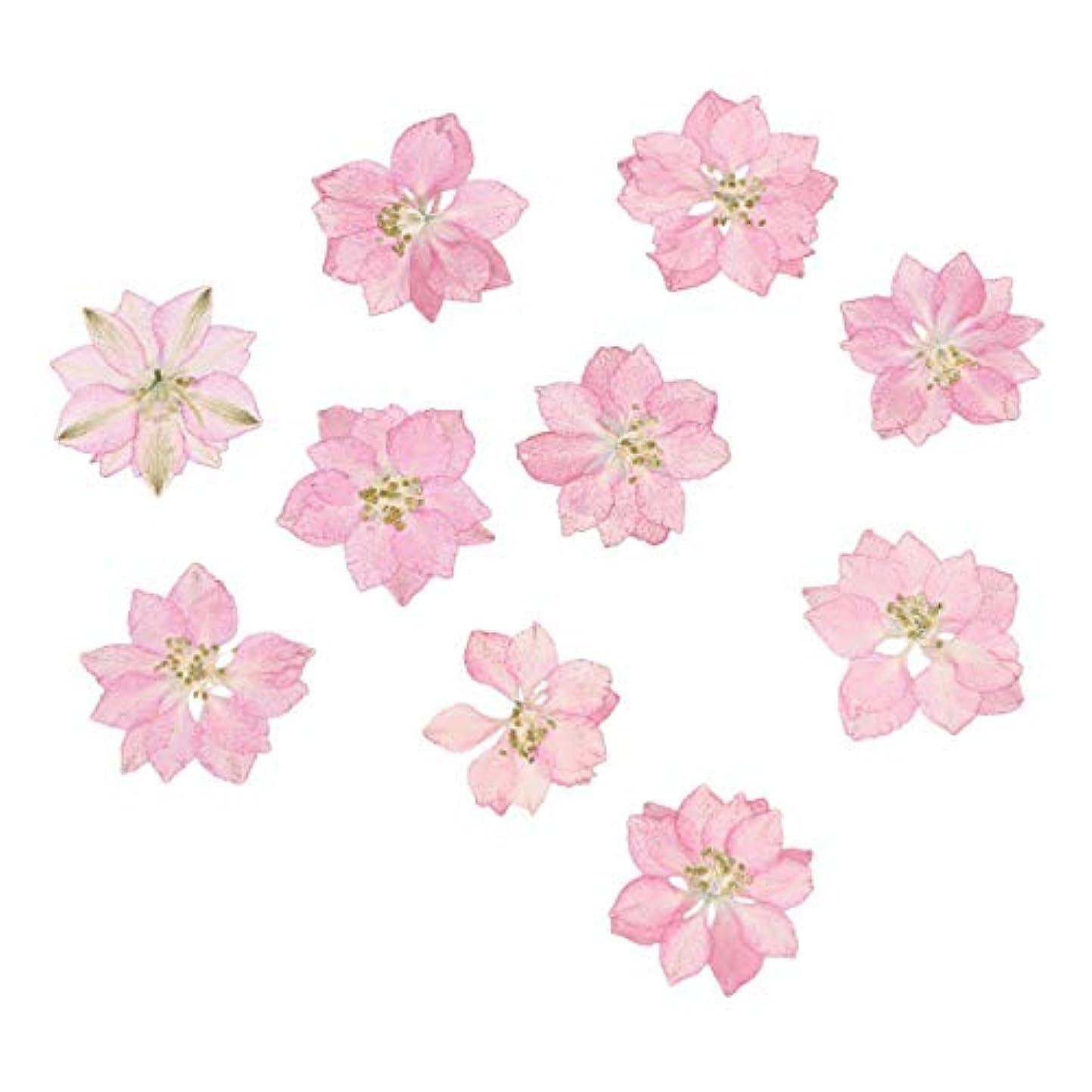 リマークフライト黒くするHEALLILY リアルドライ押花天然花飾り用diyジュエリーペンダント電話ケースカード20ピース