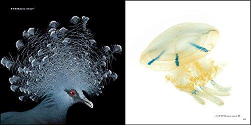 PHOTO ARK 動物の箱舟 絶滅から動物を守る撮影プロジェクト