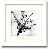 「Lily Muscadet」【X-ray Photograph】Steven N.Meyers(エックスレイ フォトグラフ インテリアアートフレーム)[絵画通販]【絵のある暮らし】