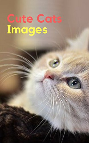 Amazon cute cats image funny cat photos book persian exotic wells danielscute cats image funny cat photos book persian voltagebd Images