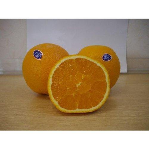 オレンジ オレンジ
