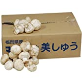 【箱売り】 ホワイトマッシュルーム 1箱(約2kg) 福岡・岡山産 【業務用・大量販売】