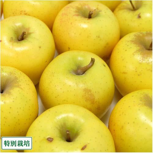 【加工用】無・無りんご(黄) 10kg箱 特別栽培 (青森県 北上農園) 産地直送 ふるさと21