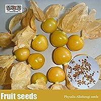 種子のパッケージではありません植物:簡単個IdentifiableAlkei種子、ランタンフルーツ種子、aceousSeed冬桜の種