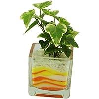 花市場直送便 アイビー(カラーサンド植え) ブロックM 黄色/オレンジ