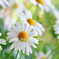 クリア:ホット販売100ピースミックスカラー花屋菊種子、花種子盆栽種子ポット植物ホームガーデン