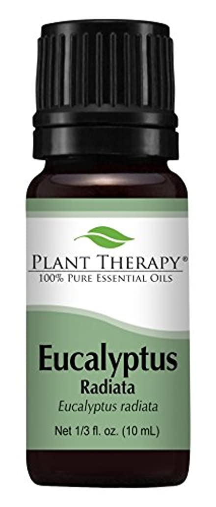 健全競ううめきEucalyptus Radiata Essential Oil. 10 ml (1/3 oz) 100% Pure, Undiluted, Therapeutic Grade by Plant Therapy Essential Oils