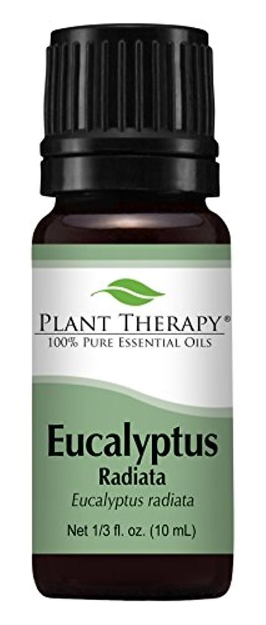 ノベルティ秘書面積Eucalyptus Radiata Essential Oil. 10 ml (1/3 oz) 100% Pure, Undiluted, Therapeutic Grade by Plant Therapy Essential Oils