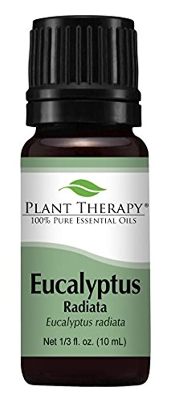 渇き即席北Eucalyptus Radiata Essential Oil. 10 ml (1/3 oz) 100% Pure, Undiluted, Therapeutic Grade by Plant Therapy Essential...