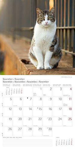 Katzen Cats 2018 Trends & Classics Kalender