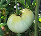 800個の種子ホワイトワンダービーフステーキトマト