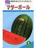 マダーボール みかど協和の小玉スイカ種です