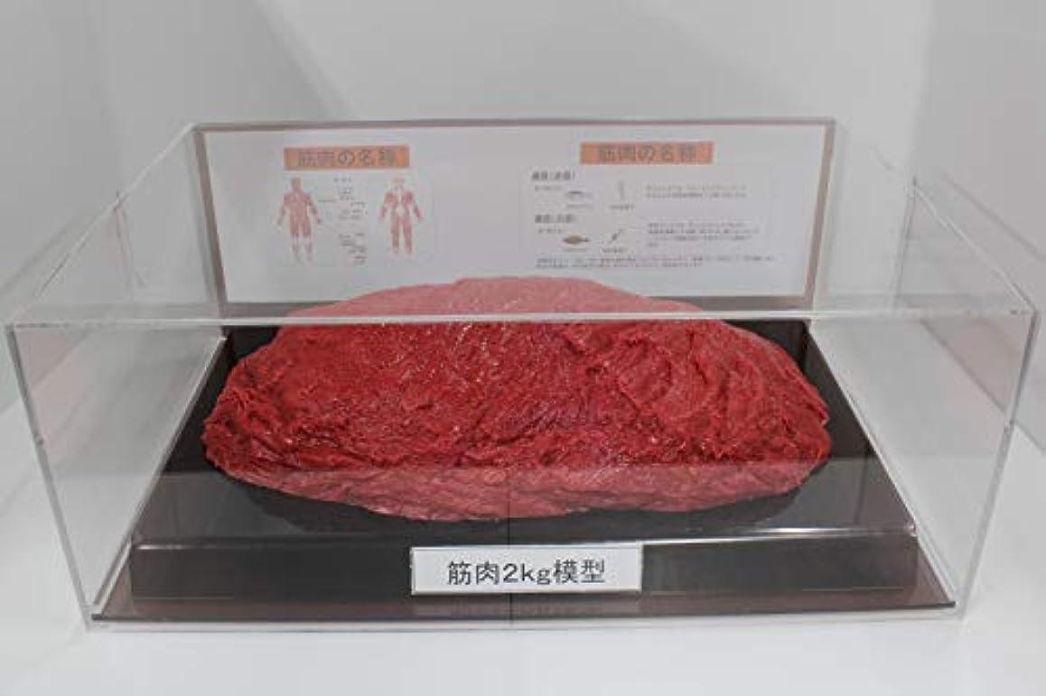 休眠堀甥筋肉模型 フィギアケース入 2kg ダイエット 健康 肥満 トレーニング フードモデル 食品サンプル