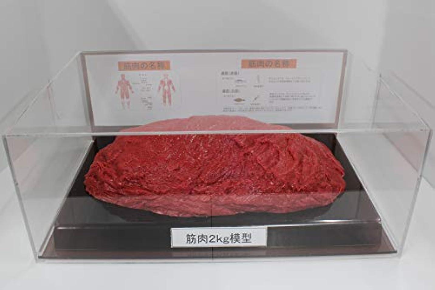 苦しむ束結論筋肉模型 フィギアケース入 2kg ダイエット 健康 肥満 トレーニング フードモデル 食品サンプル